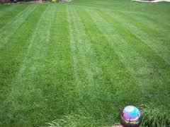 Yard Pro